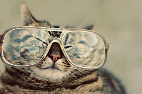 メガネが似合う女の子にそそられますか?