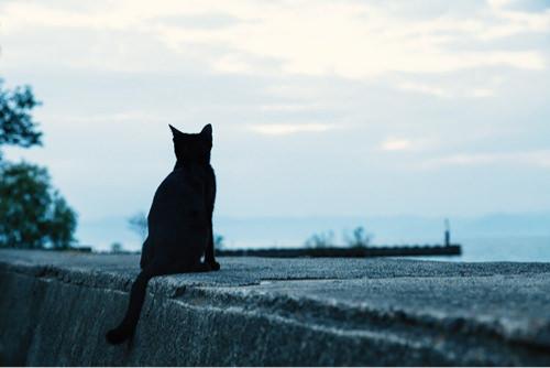 埠頭の黒ネコ