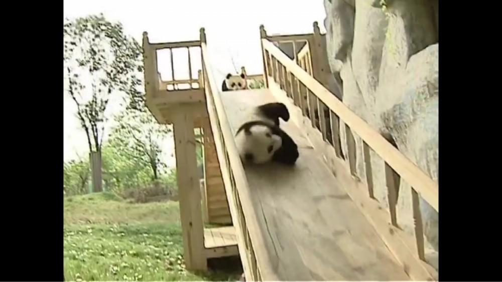 滑り台にハマったパンダが可愛すぎると話題
